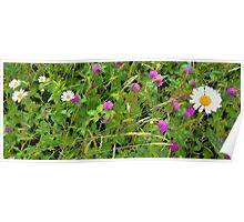 White Dasies and Red Clover Poster