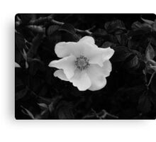 Black & White Beach Rose Canvas Print
