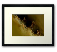 The Claws Crawl  Framed Print