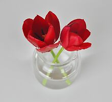 Red tulip still life by Morag Anderson