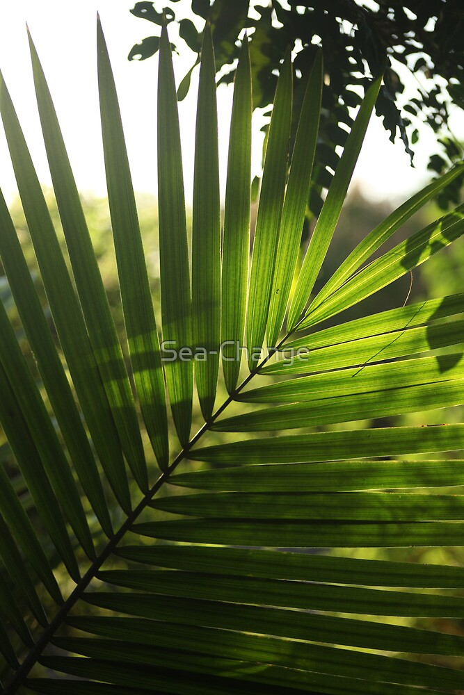 Light through a Palm Leaf by Sea-Change