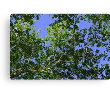 Green Leaves Against Blue Sky Canvas Print