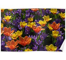Bright spring bulbs Poster