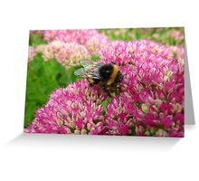 Bumble Bee on the Sedum Greeting Card