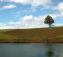 Rich Farming land, Northern Tasmania, Australia. by kaysharp