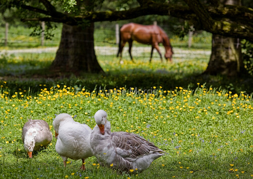Country Life by Lynne Morris