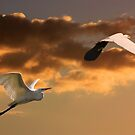 Setting Sun Egrets by byronbackyard