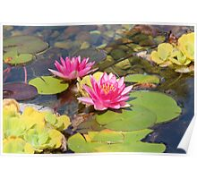 Lovely Garden Pond Poster