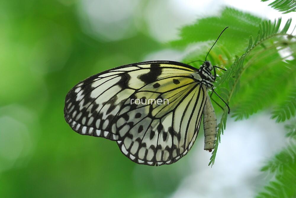 Butterfly  by roumen