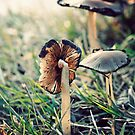 Pinwheel mushroom by Sangeeta