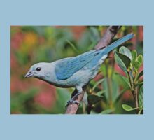 Blue Tanager Kids Clothes