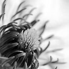 Clematis in Black and White by Neil MacGregor
