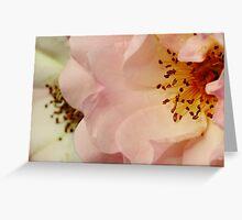 Miss Bush, Rose Bush Greeting Card