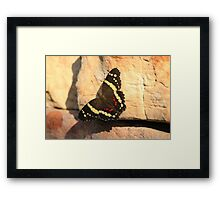 Banded Peacock Butterfly (Anartia Fatima) Framed Print