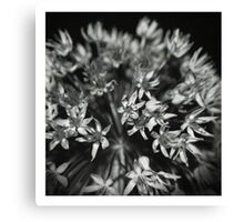 A firework in bloom Canvas Print