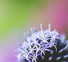 Spiked In The Corner by ghd-photography