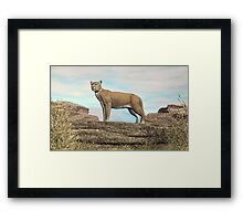 Cougar on the Rocks Framed Print