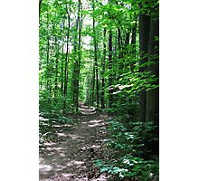 Path Through the Forest Photographic Print