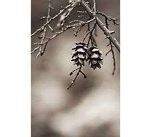 Coniferous Couple Photographic Print