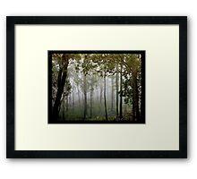 Eucalypts in the Mist Framed Print