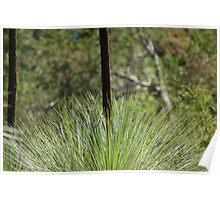Grass Tree Poster
