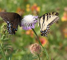 Ebony & Ivory, Living in Perfect Harmony by April-in-Texas