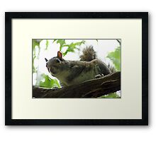 The Curious Squirrel Framed Print