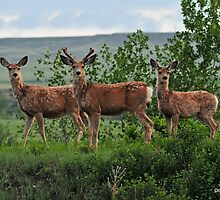Family Portrait, Montana style! by Donna Ridgway