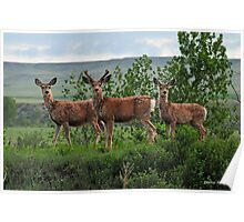 Family Portrait, Montana style! Poster