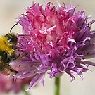 Dining on a Chive by Alfy