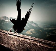 At Eagle's nest by Farfarm