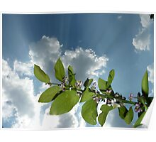 citrus blooming in sun rays Poster