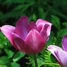 Elegant Purple by eliz134