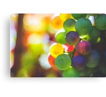 Rainbow On The Vine Canvas Print