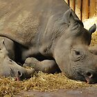 Mum and baby by Photodx
