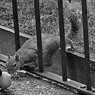 Meeting the locals: St james's Park, London by JLaverty