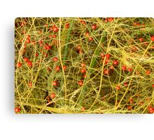 Asparagus Berries Canvas Print