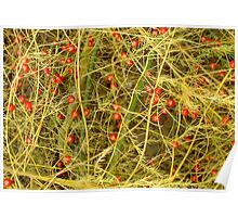 Asparagus Berries Poster