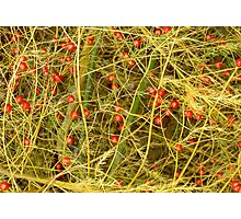 Asparagus Berries Photographic Print