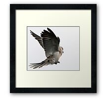 The Wings Of A Dove Framed Print