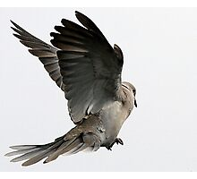 The Wings Of A Dove Photographic Print