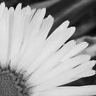 Shy Daisy by sarnia2