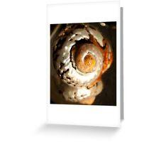 solas shell Greeting Card