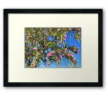 Desert Willow Framed Print