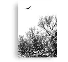 Hawk hunt Canvas Print