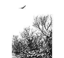 Hawk hunt Photographic Print