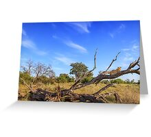 Leopard View Greeting Card
