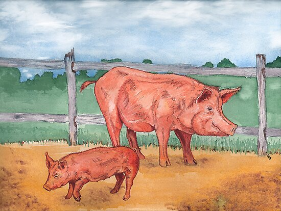 Tamworth Pigs by Pete Janes