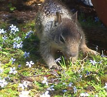crazy squirrel by Jimmy Joe