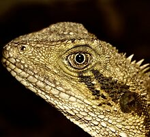 Eastern Water Dragon Portrait by Tony Steinberg